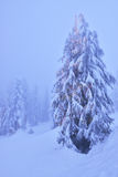 Christmas tree with lights in snowy mountain  forest Stock Photography