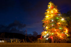 Christmas tree lit at night Stock Photo