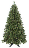 Christmas tree lit. Pine Royalty Free Stock Photography