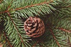 Christmas tree and lump. Winter macro photo stock photos