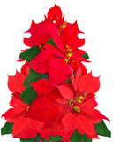 Christmas tree made of poinsettia flowers. On white background Stock Photos