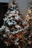 Christmas tree. The magic of the Christmas tree with its lights and its colors Stock Photo