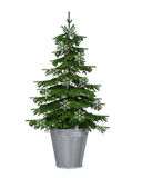 Christmas tree in metal bucket with snowflakes isolated on white background. Holiday concept Royalty Free Stock Photos