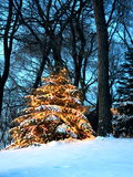 Christmas tree in Minnesota Royalty Free Stock Photos