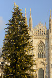 Christmas Tree and Minster, Milan Royalty Free Stock Images