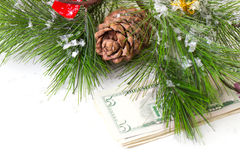 Christmas tree and money isolated. Cone and christmas tree isolated on white Stock Image