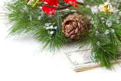 Christmas tree and money isolated. Cone and christmas tree isolated on white Royalty Free Stock Image
