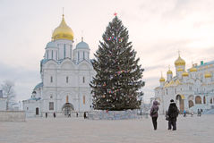 Christmas tree in Moscow Kremlin. Archangels and Annunciation churches. MOSCOW - JANUARY 01, 2016: Christmas tree in Moscow Kremlin, on Sobornaya square. Popular stock photo
