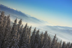 Christmas tree in the mountains. Horizon at an angle Royalty Free Stock Photo