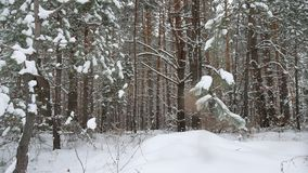 Christmas tree nature branch in snow pine winter fairy landscape forest stock footage