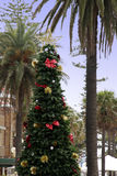 Christmas Tree next to Palm Tree. Christmas in Summer, Manly, Sydney, Australia Royalty Free Stock Photo