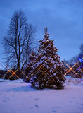 Christmas tree at night Stock Images