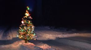 Christmas tree in the night field Royalty Free Stock Photo