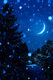 Christmas Tree at Night Outdoors with Moon Royalty Free Stock Photos
