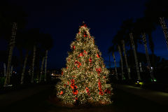 Christmas Tree at Night with Red Bows. Christmas Tree lit up at Night with Red Bows and Palm Trees in the background outlining the tree Royalty Free Stock Photos