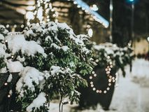 Christmas tree at night snowy weather Royalty Free Stock Photography
