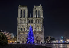 Christmas tree at Notre Dame de Paris Royalty Free Stock Photos