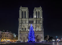 Christmas tree at Notre Dame de Paris Stock Photography