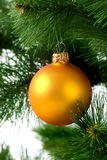 Christmas tree with orange sphere Royalty Free Stock Image