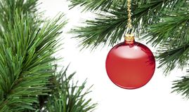 Christmas Tree Ornament Banner Background. A red christmas ornament on a tree with a white background royalty free stock photo