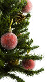 Christmas tree with ornaments Royalty Free Stock Images