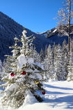 Christmas tree outdoor Stock Image