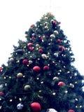 Christmas tree outdoors Royalty Free Stock Image