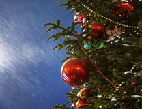 Christmas tree  outdoors Stock Photos