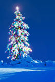 Christmas tree outside. Snow covered Christmas tree outside at night Royalty Free Stock Images