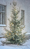 Christmas tree outside in snowy garden Royalty Free Stock Photo