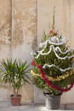 Christmas tree and palm tree Royalty Free Stock Photo