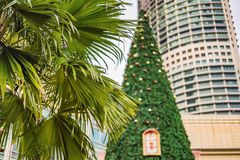 Christmas Tree and Palm Trees Decorated in tropical holiday location royalty free stock image