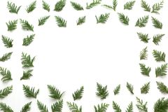 Christmas tree pattern with copy-space. Christmas tree pattern with copy space. Top view, flat-lay Stock Photography