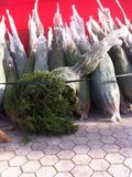 Christmas tree. Pile of Christmas trees in front of the shop Stock Image