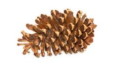 Christmas tree with pine cones Royalty Free Stock Photos
