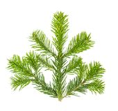 Christmas tree pine twig isolated white background. Christmas tree pine twig isolated on white background Stock Images