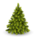 Christmas Tree Pine  on White Stock Photos