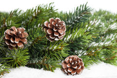 Christmas tree with pinecone Royalty Free Stock Image