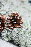 Christmas tree with pinecone Stock Images