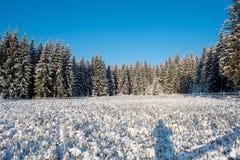 Christmas tree plantation, nursery. Christmas tree plantation, fir tree nursery covered by snow stock photos