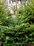 Christmas tree, preparing for Christmas, Düsseldorf Royalty Free Stock Image