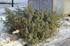 Christmas tree is put down at bottle bank Royalty Free Stock Photography