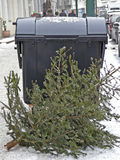 Christmas tree is put down at a dumpster Royalty Free Stock Image