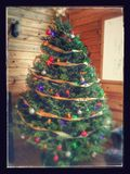 Christmas tree. Real christmas tree Royalty Free Stock Image