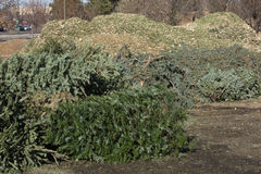 Christmas Tree Recycling. City Christmas Tree recycling drop-off site stock photography