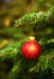 Christmas tree with red ball decoration Stock Images