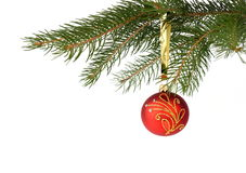 Christmas tree with red bauble isolated on white. A branch of Christmas tree with red bauble isolated on white Stock Photo