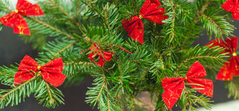 Christmas Tree with red bows. Christmas tree decorated with little red bows Royalty Free Stock Photo