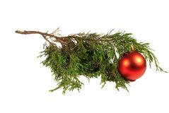 Christmas tree and red Christmas ball Stock Photography