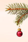 Christmas tree and red glass ball Royalty Free Stock Photos